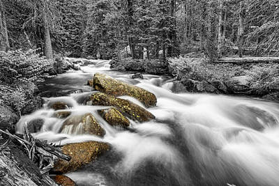 Monochrome Photograph - Rocky Mountain National Forest Stream Bwsc by James BO Insogna