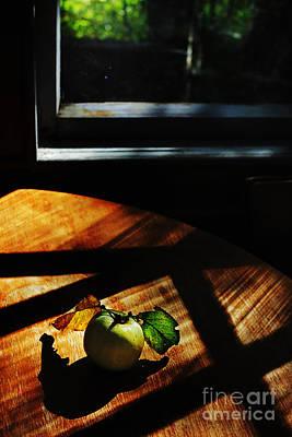 Gnaw Photograph - Rodent by Elena Lir-Rachkovskaya