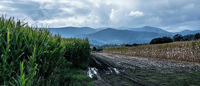 Rogue Valley Corn Print by Mick Anderson