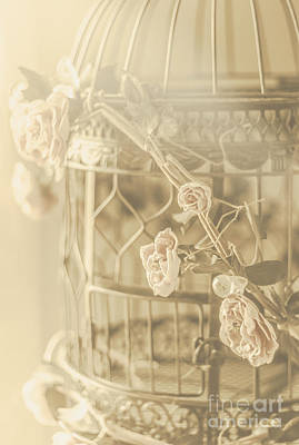 Bird Cages Photograph - Romance In A Captive Entanglement by Jorgo Photography - Wall Art Gallery