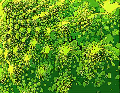 Romenesco Broccoli Print by Sarah  Niebank