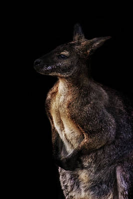 Marsupial Photograph - Roo by Martin Newman