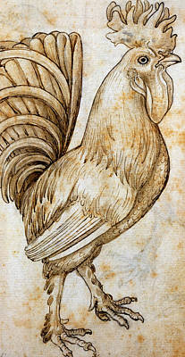 Rooster Drawing - Rooster by Leonardo da Vinci