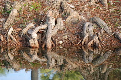 Rooted Reflections Original by Rob Hans