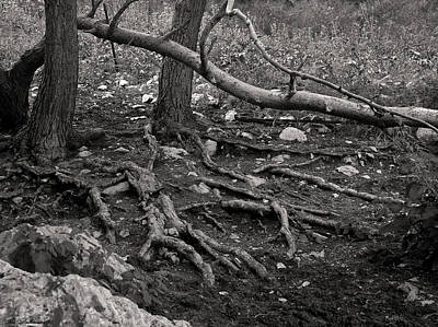 Israel Photograph - Roots by Arik Baltinester