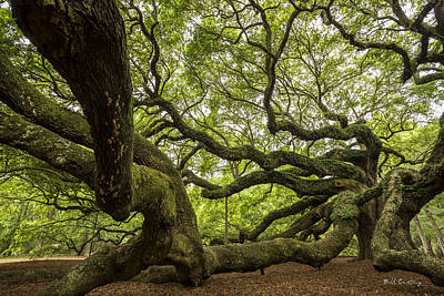 Photograph - Roots by Bill Cantey