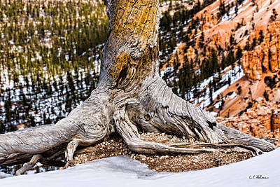Roots Gripping The Edge Print by Christopher Holmes