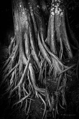 Bog Photograph - Roots by Marvin Spates