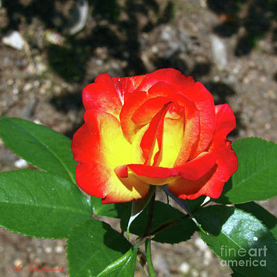 Color Photograph - Rose 07 by Arik Baltinester