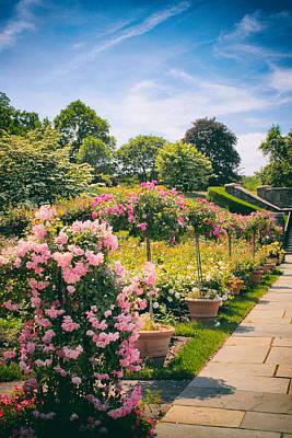 Walkway Digital Art - Rose Garden Allee  by Jessica Jenney