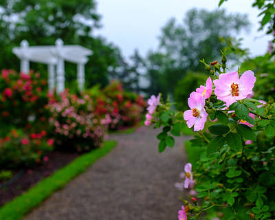 Prickly Wild Rose Photograph - Rose Garden Gateway by Chris Bordeleau