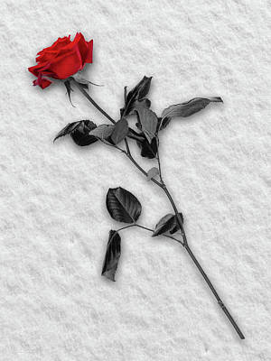 Rose In Snow Print by Wim Lanclus