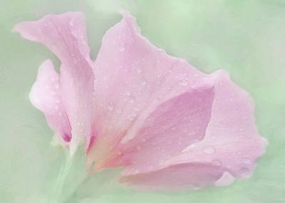 Rose Of Sharon....after The Rain Print by Hal Halli