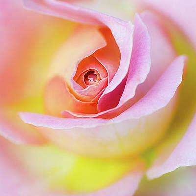 Rose Pink Petals And Drops Print by Julie Palencia
