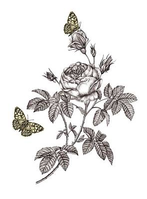 Flutter Drawing - Rose Placement by Stephanie Davies