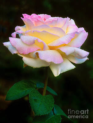 Photograph - Rose Pleasure by Greg Summers