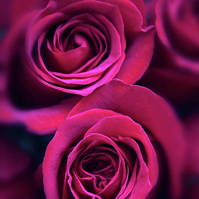 Soft Digital Art - Rose Rapture by Jessica Jenney