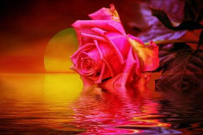 Flowers Digital Art - Rose Reflection And Sunset by Lilia D
