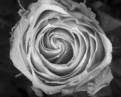 Black Photograph - Rose Spiral Black And White by James BO  Insogna
