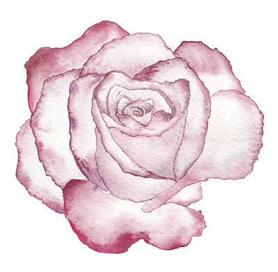Soft Drawing - Rose by Varpu Kronholm