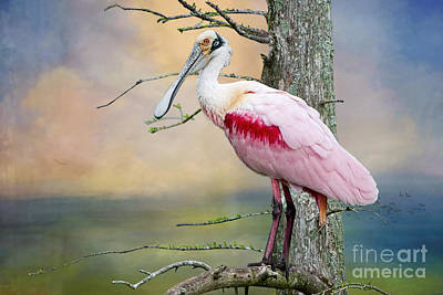Spoonbill Photograph - Roseate Spoonbill In Treetop by Bonnie Barry