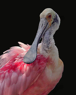 Spoonbill Photograph - Roseate Spoonbill by Larry Linton