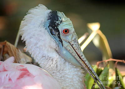 Spoonbill Photograph - Roseate Spoonbill Profile by Carol Groenen