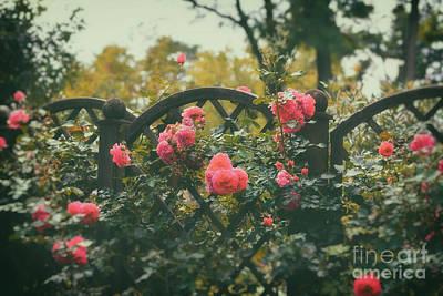 Rosen Garden Print by SK Pfphotography