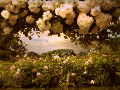 Roses Abound Print by Jessica Jenney
