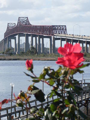 Roses At The Matthews Bridge Jacksonville Fl Original by Warren Thompson