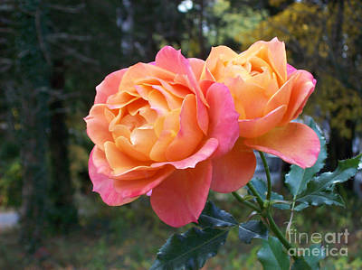 Roses In The Woods Print by Mary Ann Weger