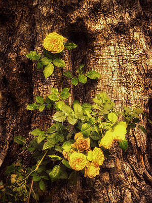 Tree Bark Photograph - Roses On Tree Bark by Wim Lanclus
