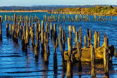 Rotting Pier Posts Print by Garry Gay