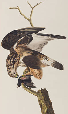 Falcon Drawing - Rough Legged Falcon by John James Audubon