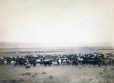 Cattle Drive Photograph - Round-up At Moss Agate, Dakota by Everett