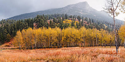 Row Of Aspens In The Fall River Valley - Fall Foliage In Estes Park Colorado Print by Silvio Ligutti