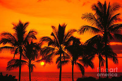 Row Of Palms Print by Bill Schildge - Printscapes