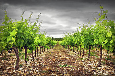 Winemaking Photograph - Row Of Vineyard by Ellen van Bodegom