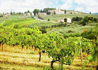 Rows Of Grapes In Tuscany Italy Vineyard Print by Susan Schmitz