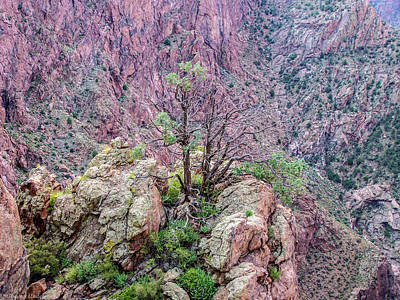 Photograph - Royal Gorge Colorado by Tommy Anderson