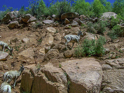 Photograph - Royal Gorge Rocky Mountain Bighorn Sheep by Tommy Anderson