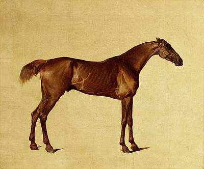 Racehorse Painting - Rufus by George Stubbs