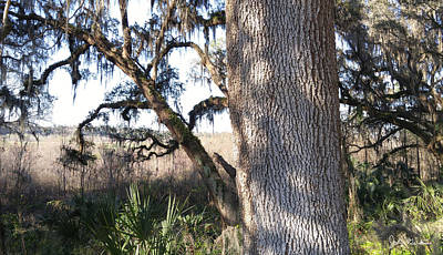 Tree Photograph - Rugged Illiusion by John Gerstner