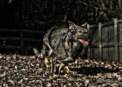 Dog Photograph - Run Like The Wind by Susan  Coppola