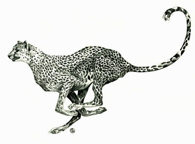Cheetah Drawing - Running Cheetah by Shirley Heyn