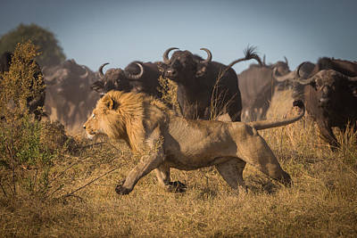 Hunters Photograph - Running For His Life by Marc Meijlaers
