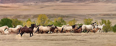 Wild Horse Photograph - Running Free by Leland D Howard