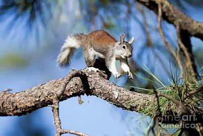 Run,squirrel Run Print by Ruth Jolly