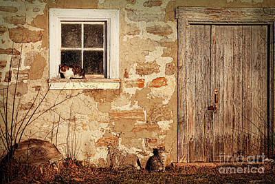 Rural Barn With Cats Laying In The Sun  Print by Sandra Cunningham