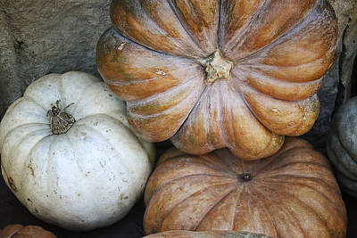 Rustic Pumpkins Print by Joan Carroll